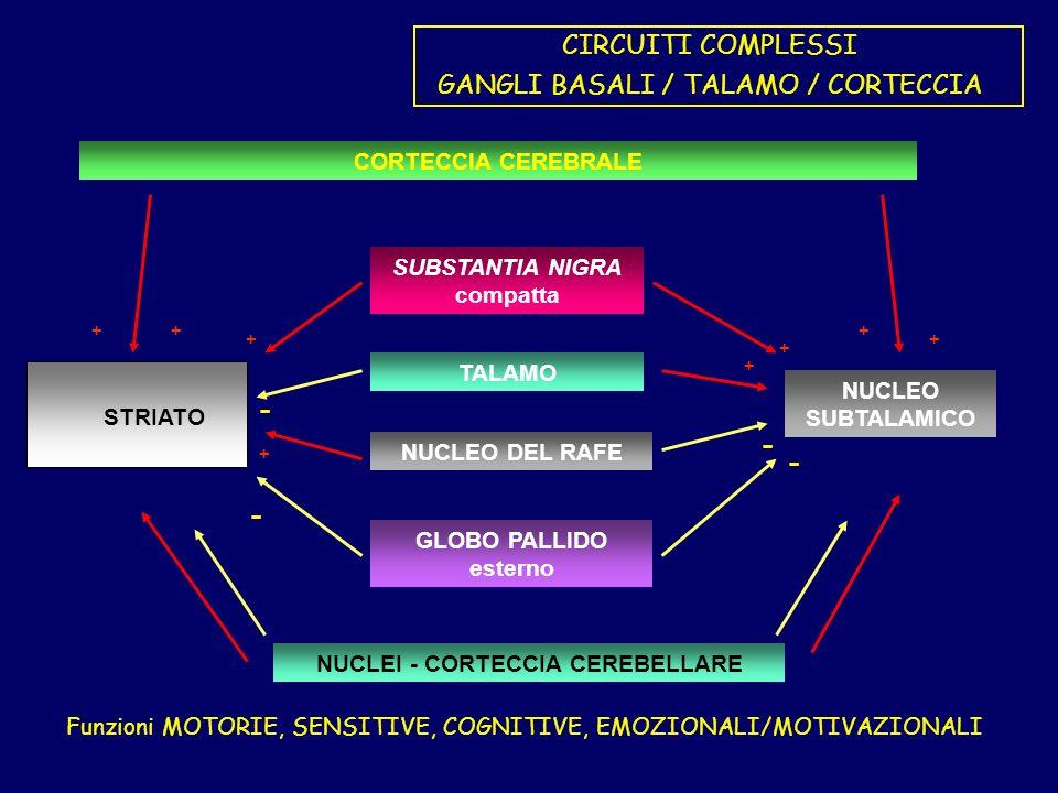SUBSTANTIA NIGRA compatta NUCLEI - CORTECCIA CEREBELLARE