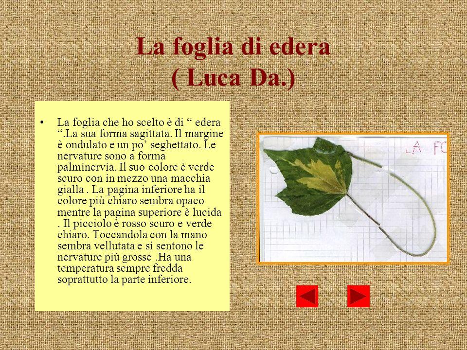 La foglia di edera ( Luca Da.)