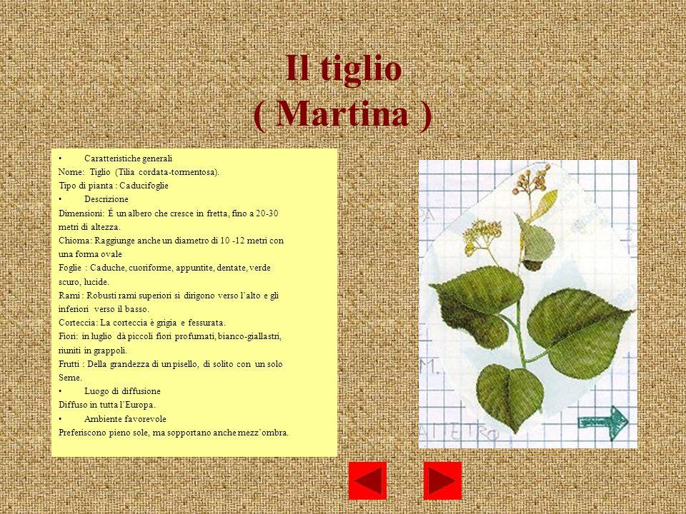 Il tiglio ( Martina ) Caratteristiche generali
