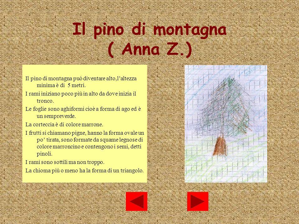 Il pino di montagna ( Anna Z.)