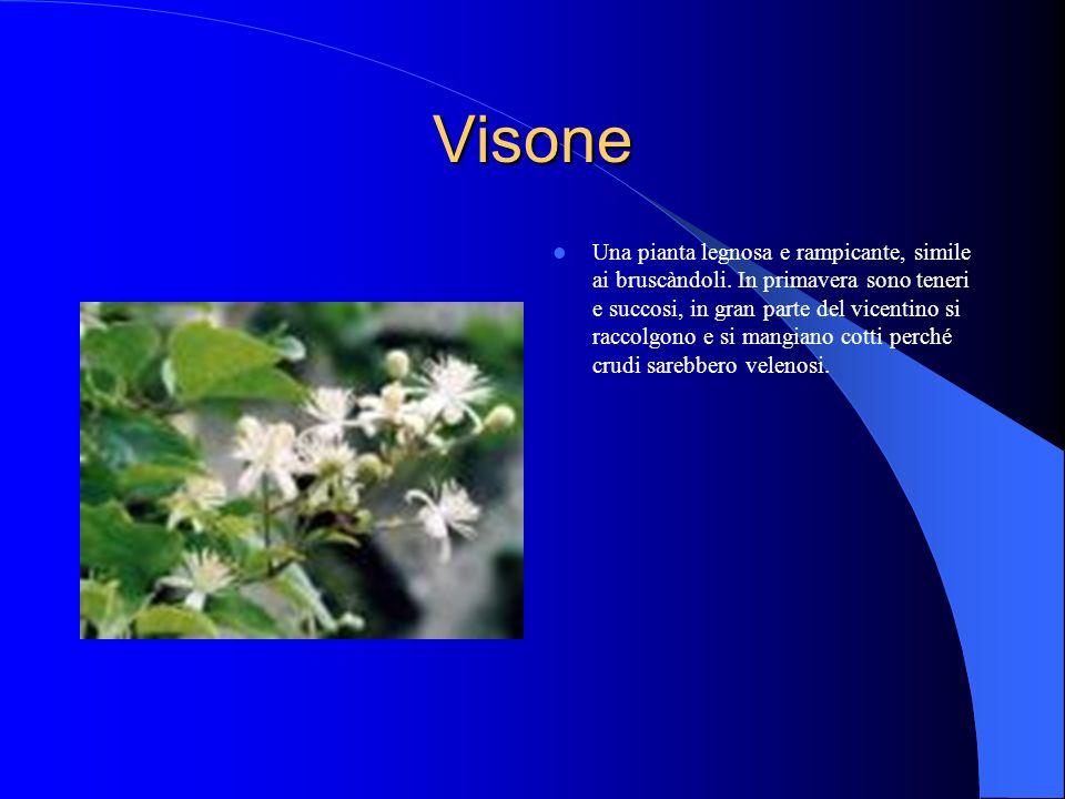 Visone