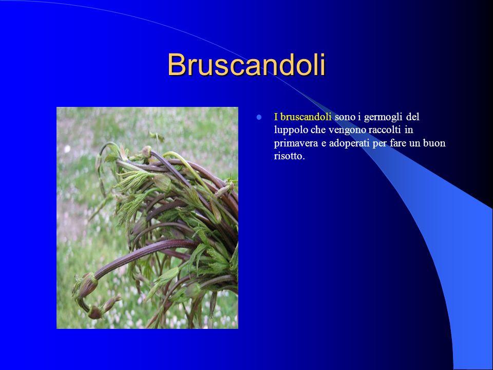 Bruscandoli I bruscandoli sono i germogli del luppolo che vengono raccolti in primavera e adoperati per fare un buon risotto.