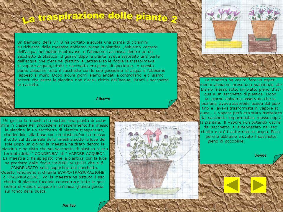 La traspirazione delle piante 2