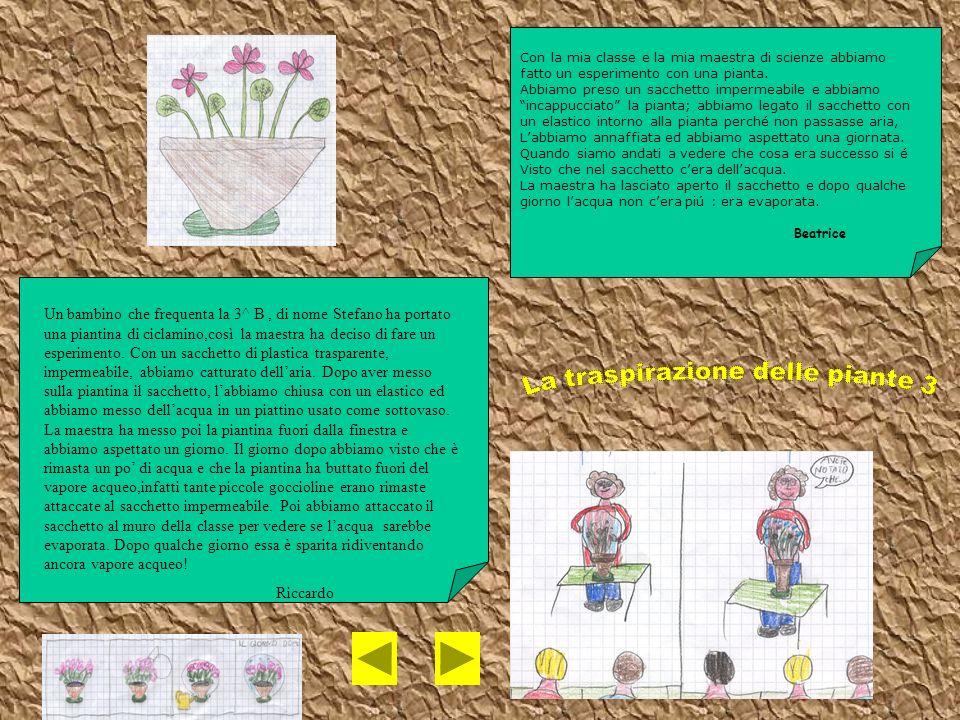 La traspirazione delle piante 3