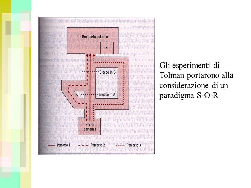 Gli esperimenti di Tolman portarono alla considerazione di un paradigma S-O-R