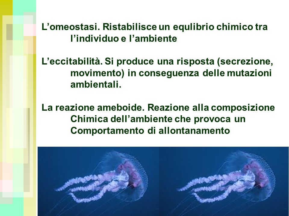 L'omeostasi. Ristabilisce un equlibrio chimico tra