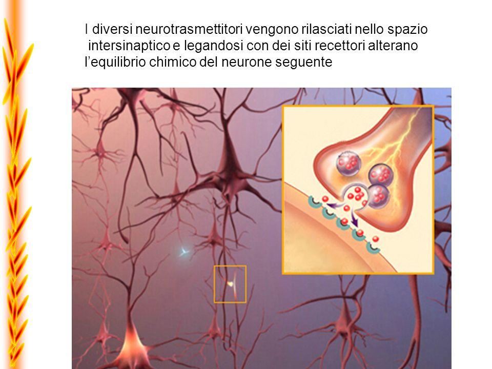 I diversi neurotrasmettitori vengono rilasciati nello spazio
