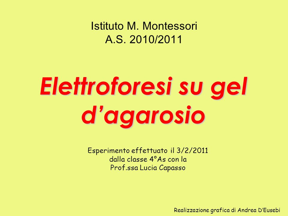 Elettroforesi su gel d'agarosio