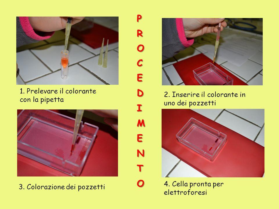 PROCEDIMENTO 1. Prelevare il colorante con la pipetta