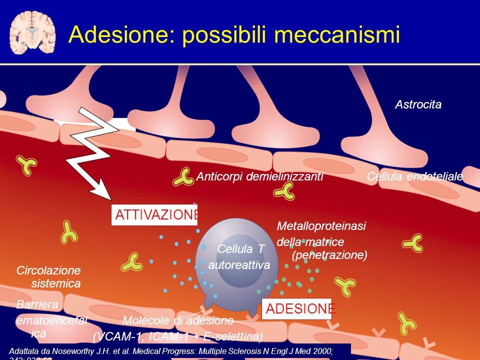 Adesione: possibili meccanismi