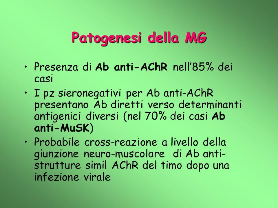 Patogenesi della MG Presenza di Ab anti-AChR nell'85% dei casi