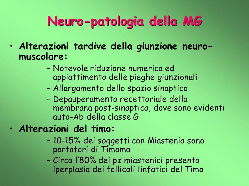 Neuro-patologia della MG