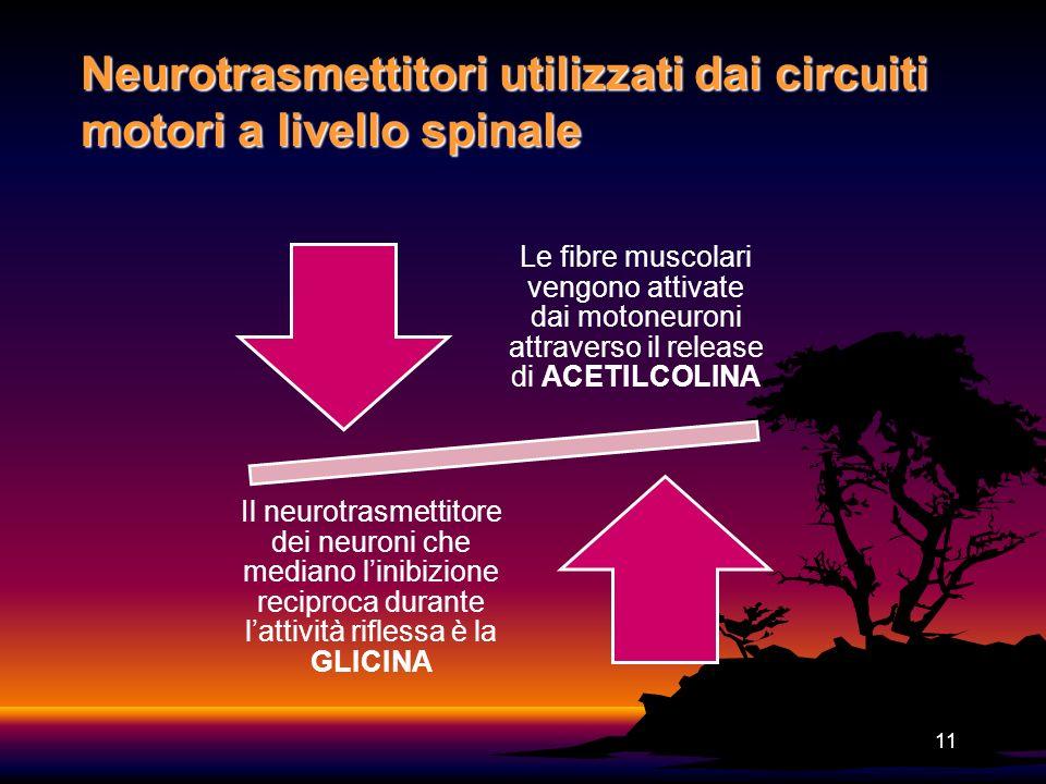 Neurotrasmettitori utilizzati dai circuiti motori a livello spinale