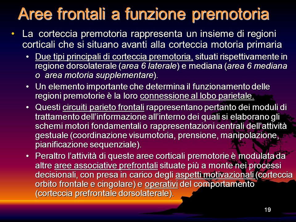 Aree frontali a funzione premotoria