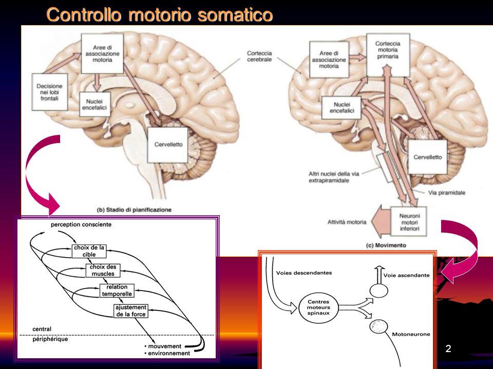 Controllo motorio somatico