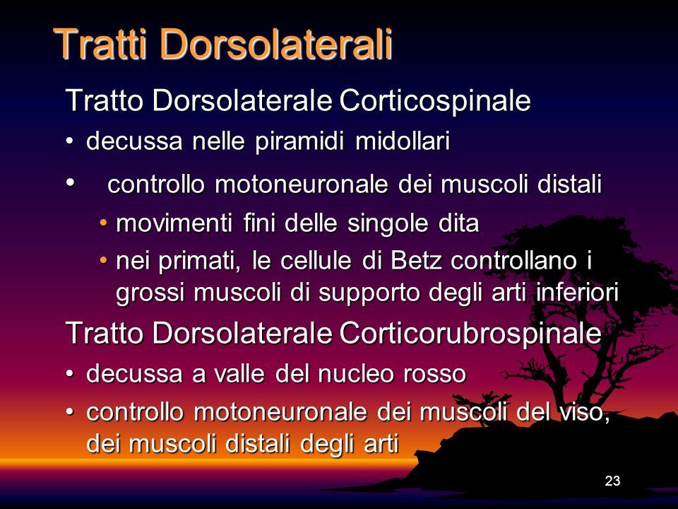 Tratti Dorsolaterali Tratto Dorsolaterale Corticospinale