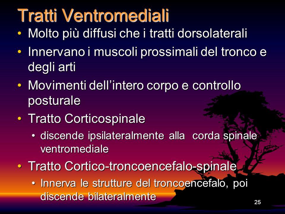 Tratti Ventromediali Molto più diffusi che i tratti dorsolaterali