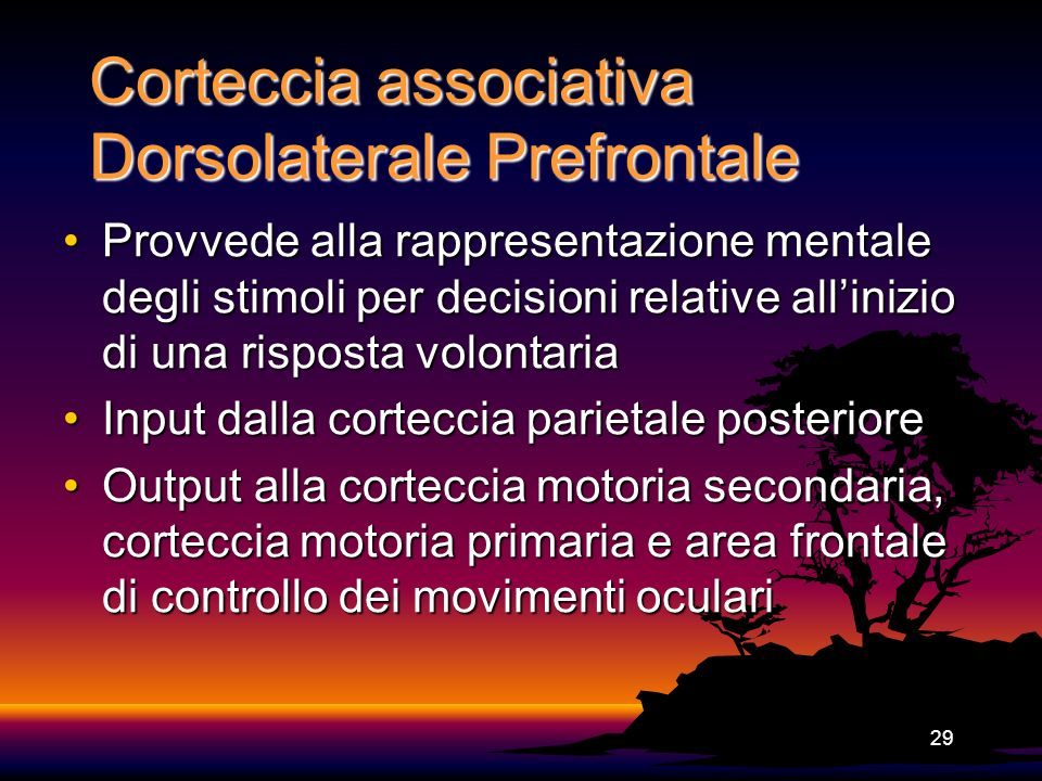 Corteccia associativa Dorsolaterale Prefrontale