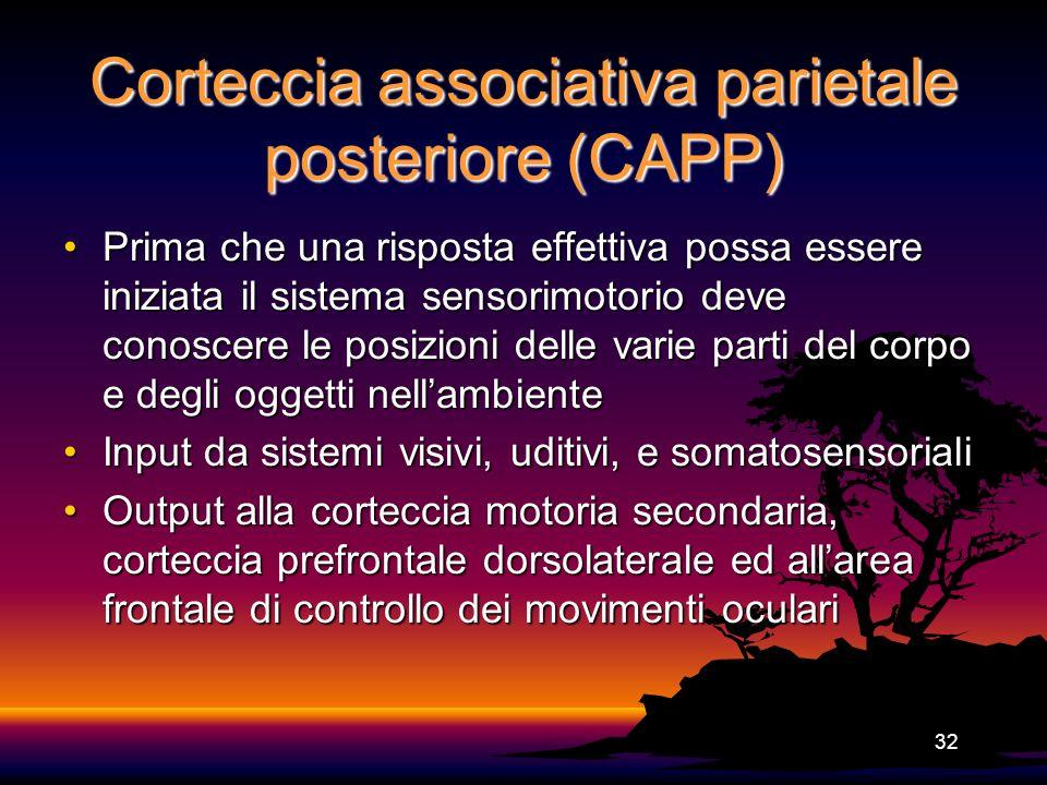 Corteccia associativa parietale posteriore (CAPP)