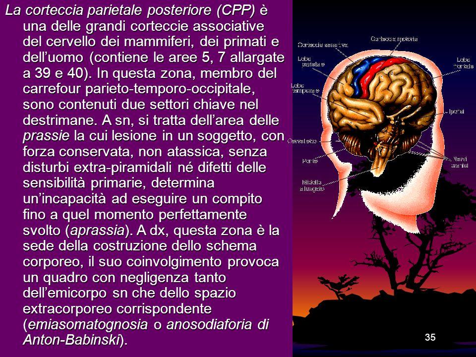 La corteccia parietale posteriore (CPP) è una delle grandi corteccie associative del cervello dei mammiferi, dei primati e dell'uomo (contiene le aree 5, 7 allargate a 39 e 40).