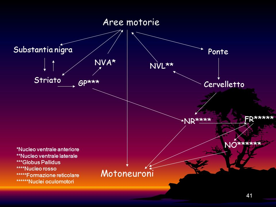 Aree motorie Motoneuroni Substantia nigra Ponte NVA* NVL** Striato
