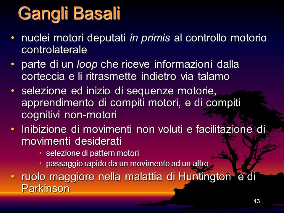 Gangli Basali nuclei motori deputati in primis al controllo motorio controlaterale.