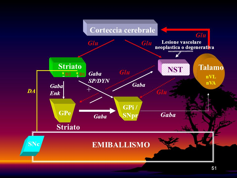 Corteccia cerebrale Striato Talamo NST - + Striato EMIBALLISMO Glu Glu