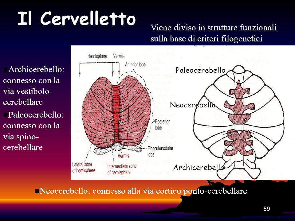Il Cervelletto Viene diviso in strutture funzionali sulla base di criteri filogenetici. Archicerebello: connesso con la via vestibolo-cerebellare.