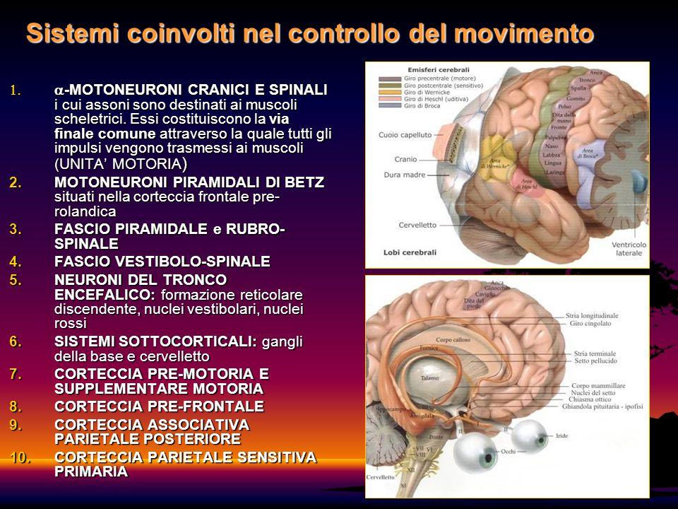 Sistemi coinvolti nel controllo del movimento