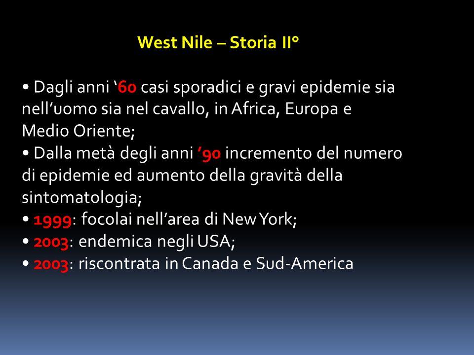 West Nile – Storia II° • Dagli anni '60 casi sporadici e gravi epidemie sia. nell'uomo sia nel cavallo, in Africa, Europa e.