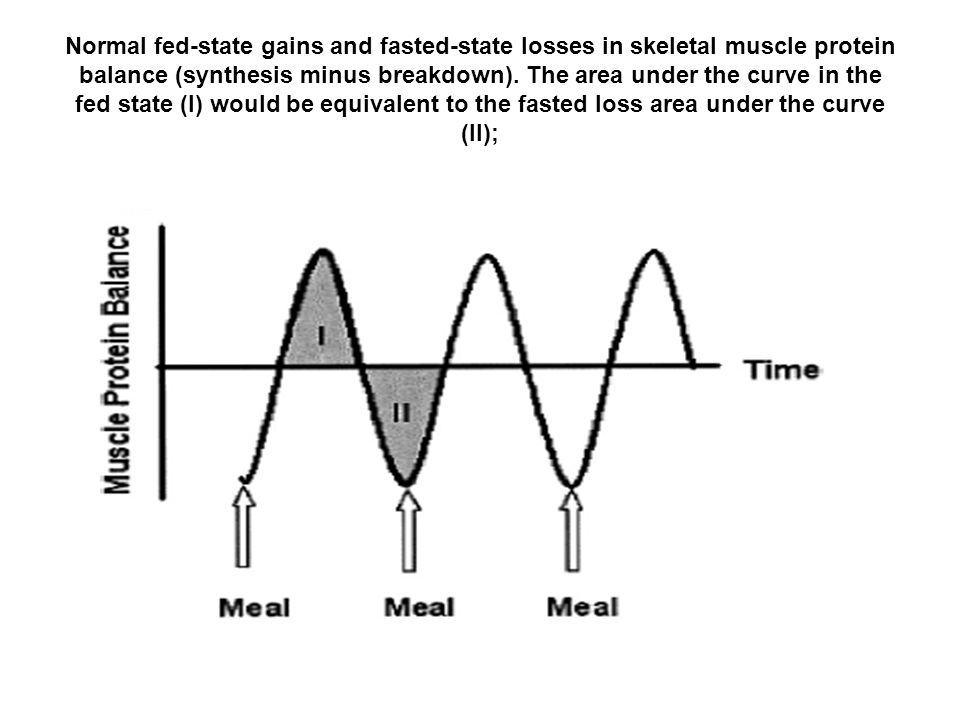 Normal fed-state gains and fasted-state losses in skeletal muscle protein balance (synthesis minus breakdown).