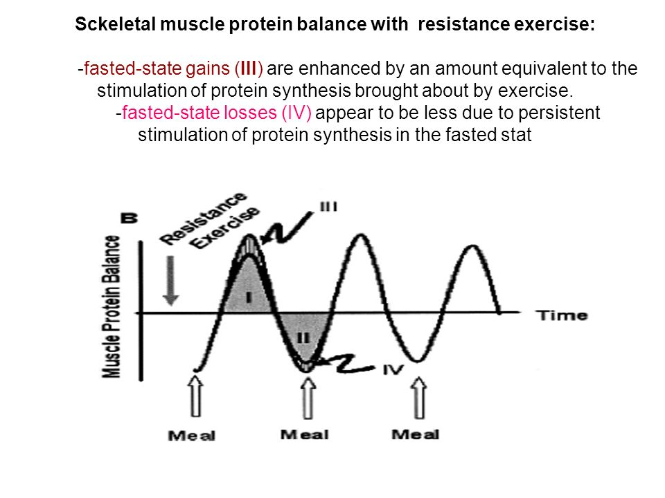 Sckeletal muscle protein balance with resistance exercise: -fasted-state gains (III) are enhanced by an amount equivalent to the stimulation of protein synthesis brought about by exercise.