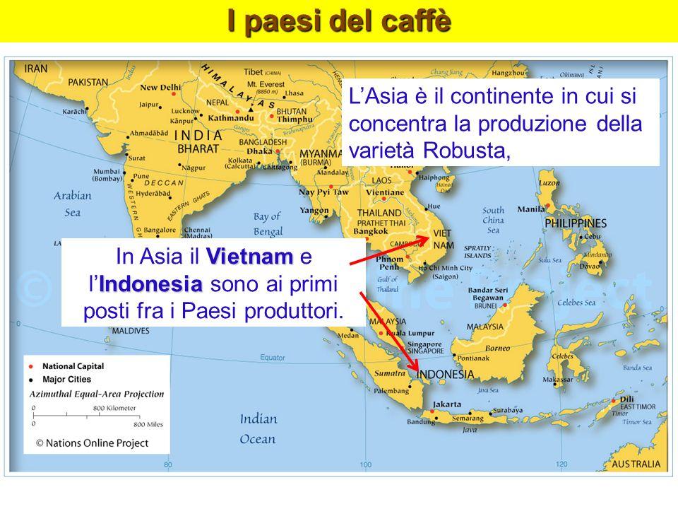 l'Indonesia sono ai primi posti fra i Paesi produttori.