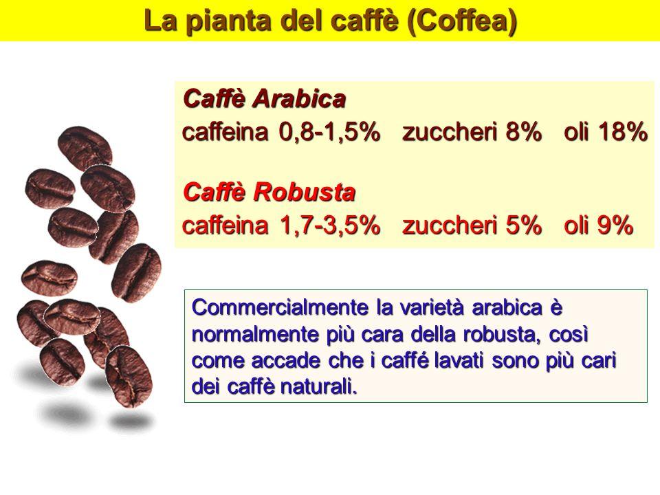 La pianta del caffè (Coffea)