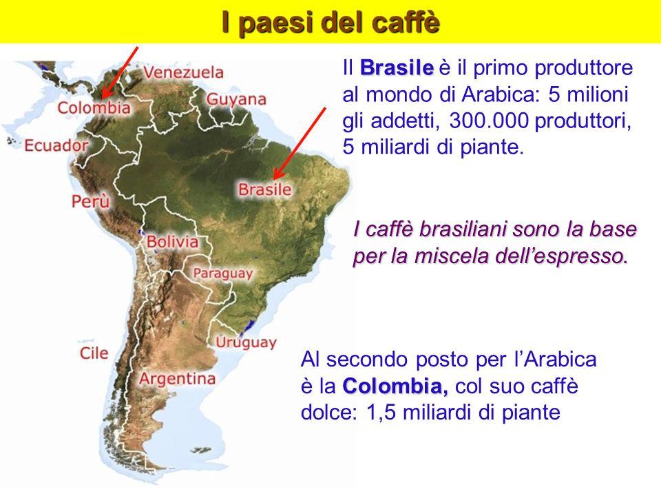I paesi del caffèIl Brasile è il primo produttore al mondo di Arabica: 5 milioni gli addetti, 300.000 produttori, 5 miliardi di piante.