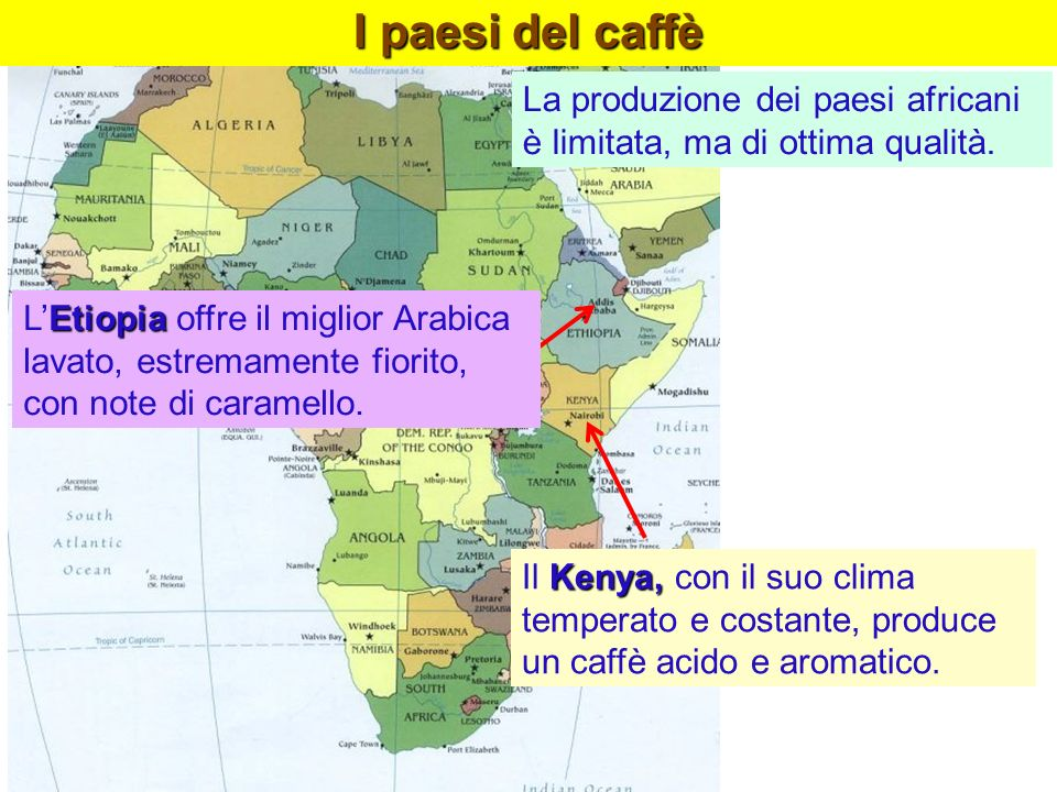 I paesi del caffè La produzione dei paesi africani è limitata, ma di ottima qualità.