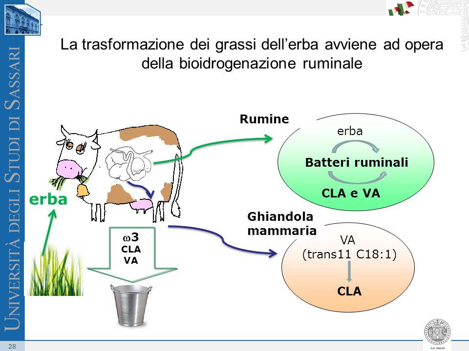 La trasformazione dei grassi dell'erba avviene ad opera della bioidrogenazione ruminale
