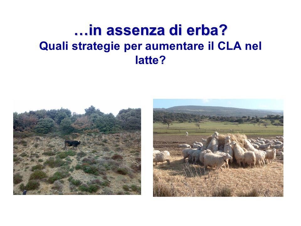 …in assenza di erba Quali strategie per aumentare il CLA nel latte