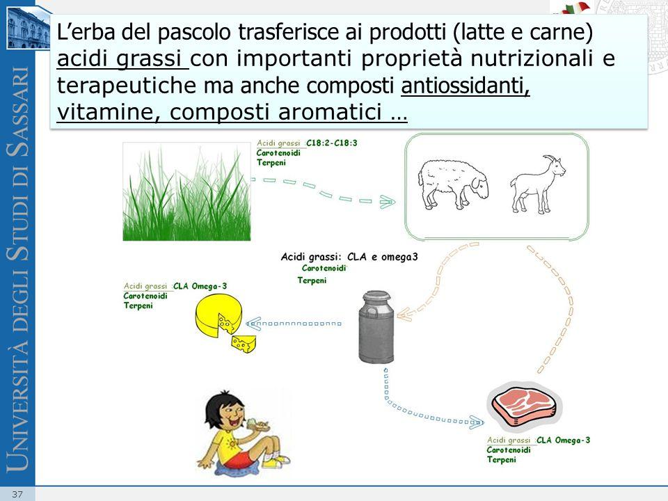 L'erba del pascolo trasferisce ai prodotti (latte e carne) acidi grassi con importanti proprietà nutrizionali e terapeutiche ma anche composti antiossidanti, vitamine, composti aromatici …