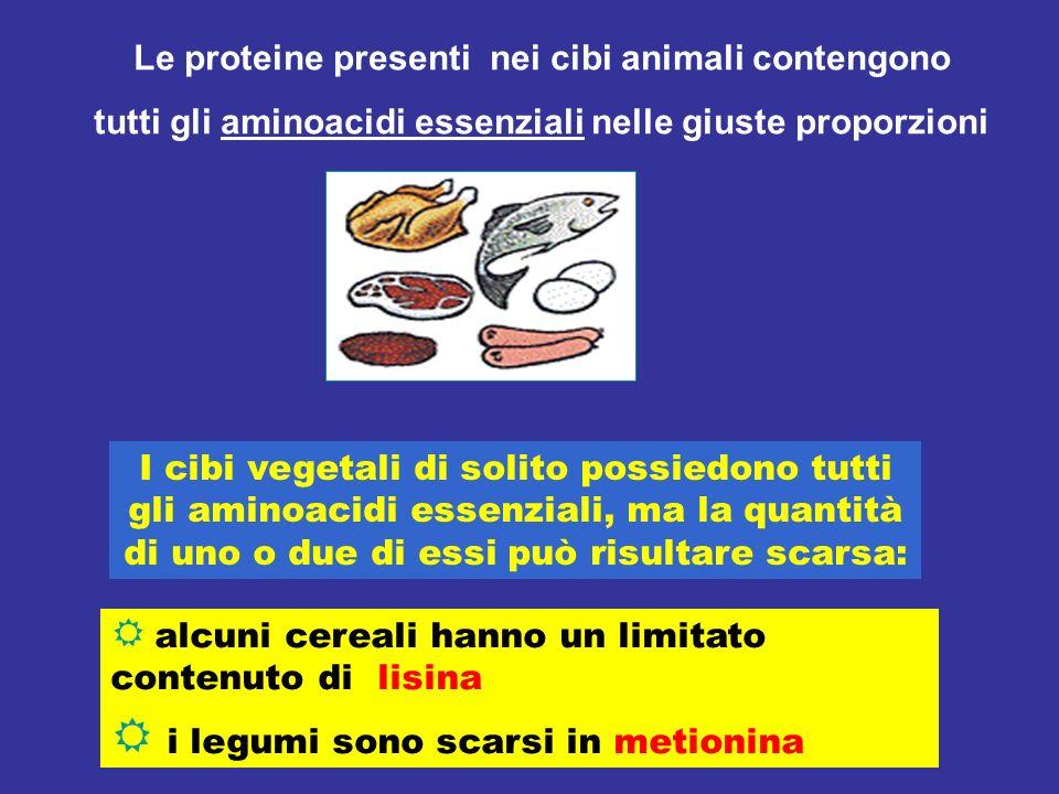 Le proteine presenti nei cibi animali contengono