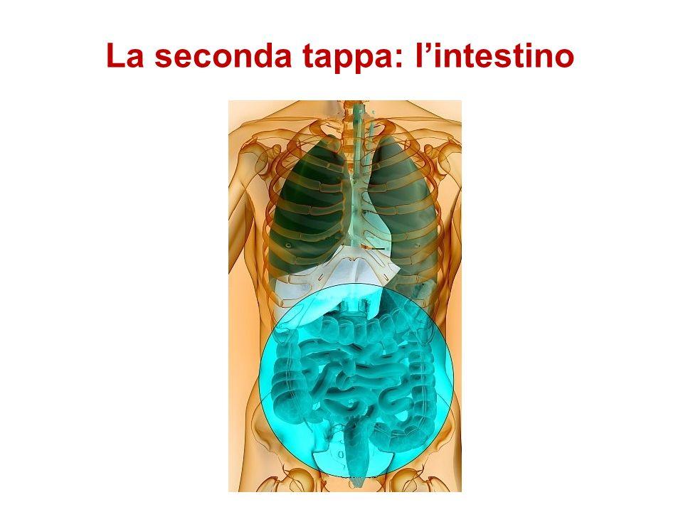 La seconda tappa: l'intestino