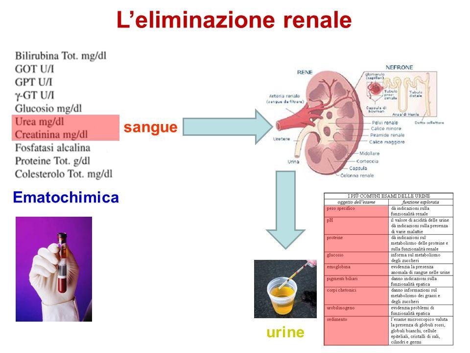 L'eliminazione renale