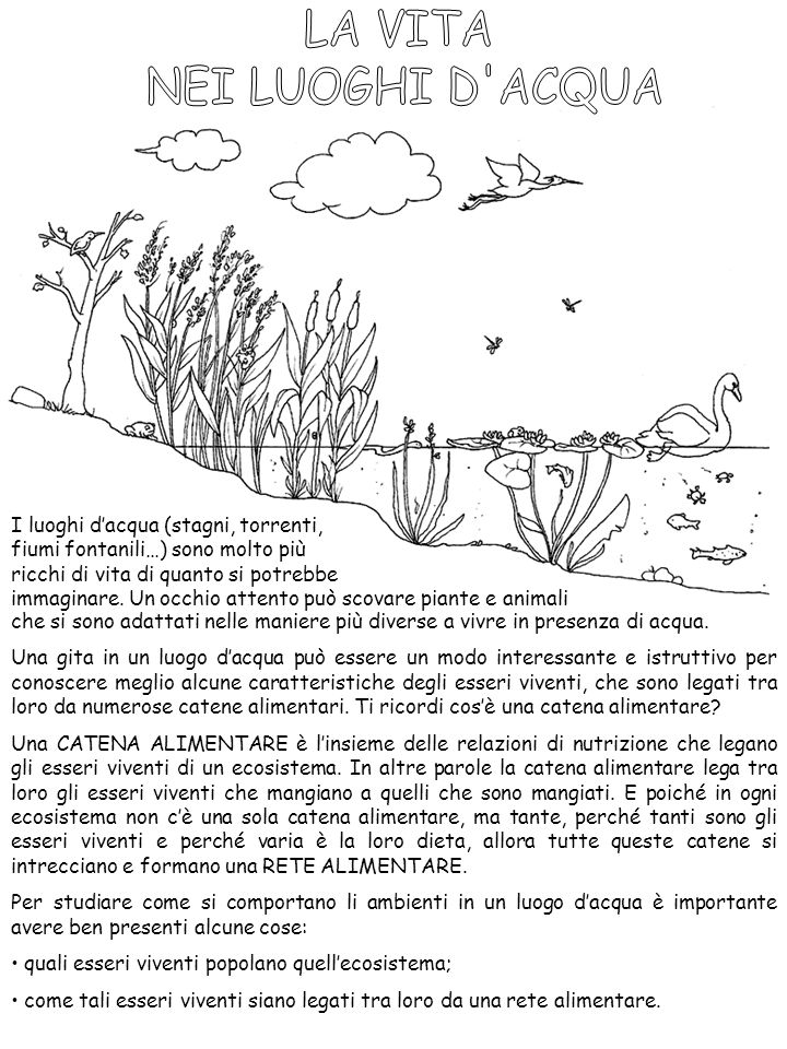 Super LA VITA NEI LUOGHI D'ACQUA - ppt video online scaricare LD93