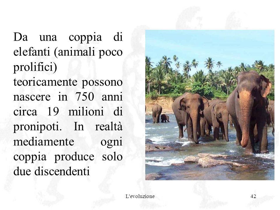 Da una coppia di elefanti (animali poco prolifici) teoricamente possono nascere in 750 anni circa 19 milioni di pronipoti. In realtà mediamente ogni coppia produce solo due discendenti