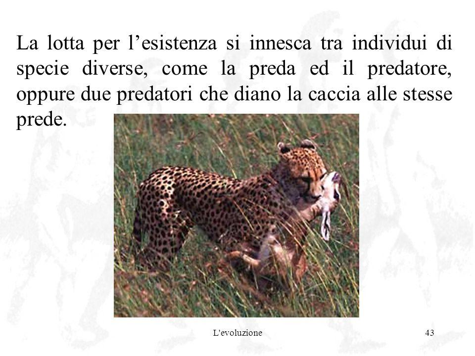 La lotta per l'esistenza si innesca tra individui di specie diverse, come la preda ed il predatore, oppure due predatori che diano la caccia alle stesse prede.