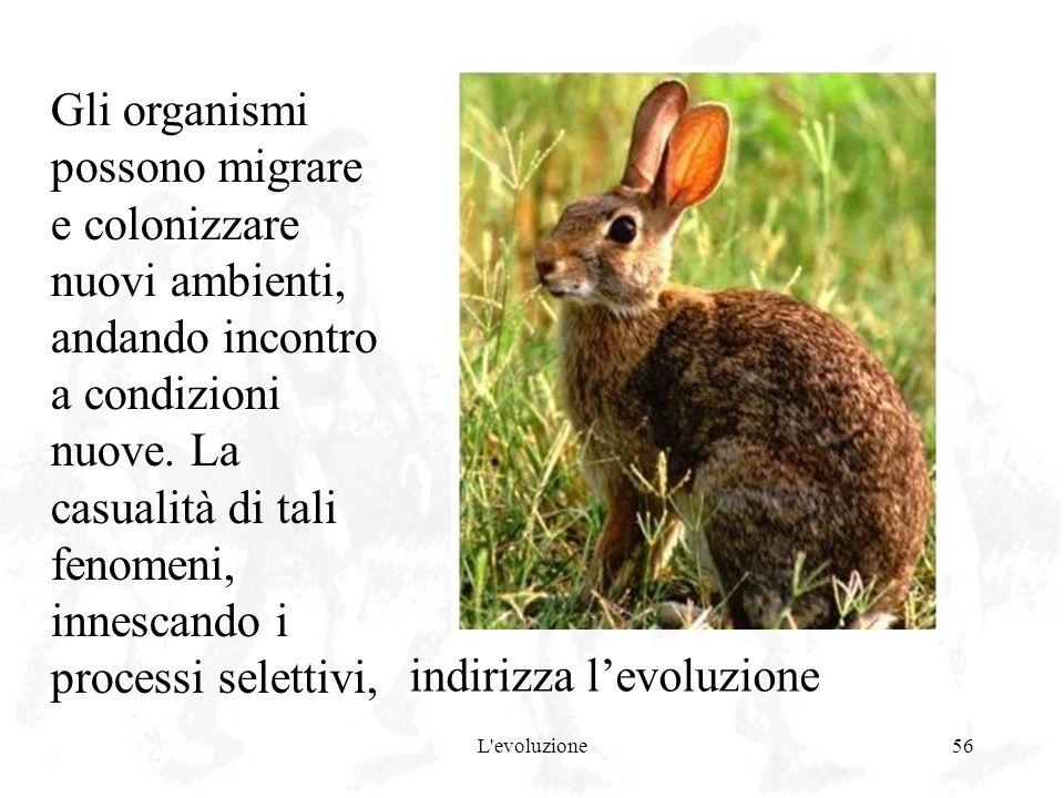 indirizza l'evoluzione