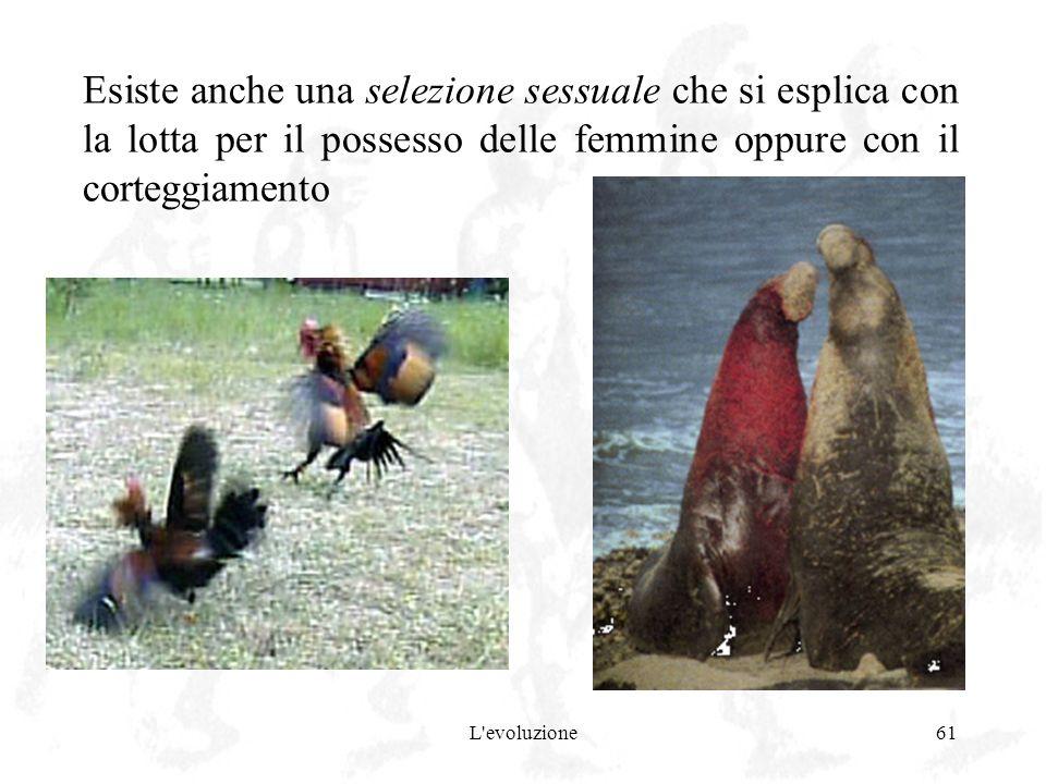 Esiste anche una selezione sessuale che si esplica con la lotta per il possesso delle femmine oppure con il corteggiamento