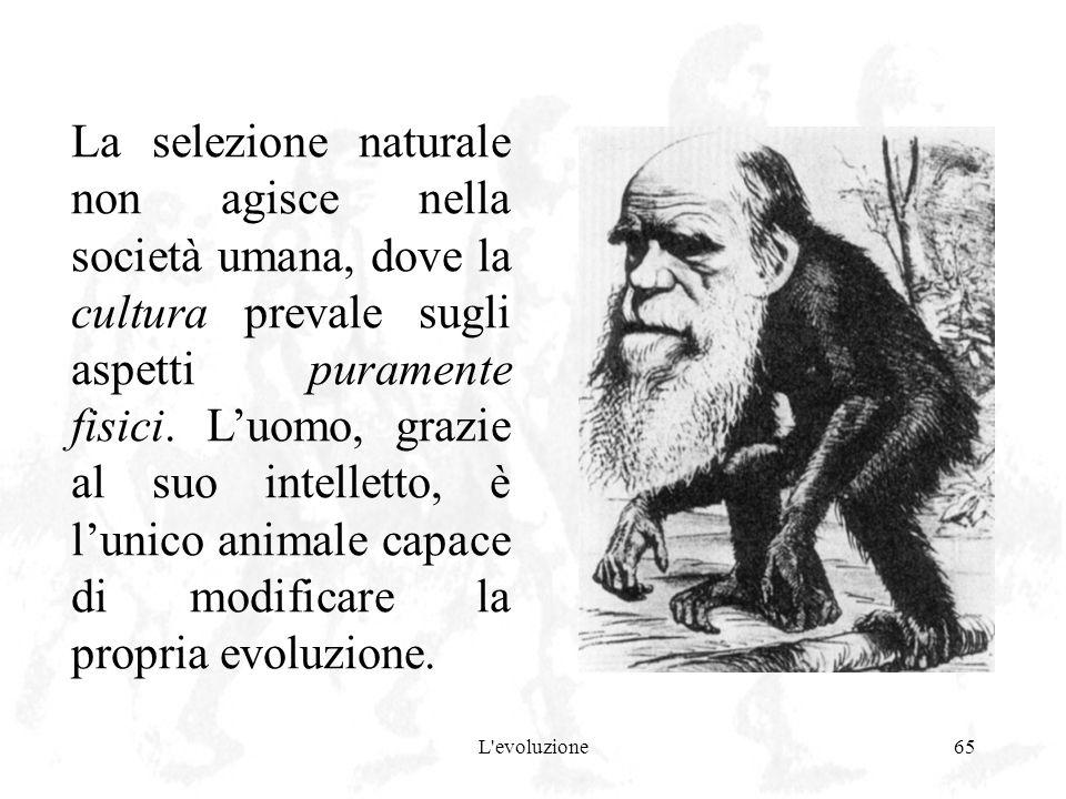 La selezione naturale non agisce nella società umana, dove la cultura prevale sugli aspetti puramente fisici. L'uomo, grazie al suo intelletto, è l'unico animale capace di modificare la propria evoluzione.