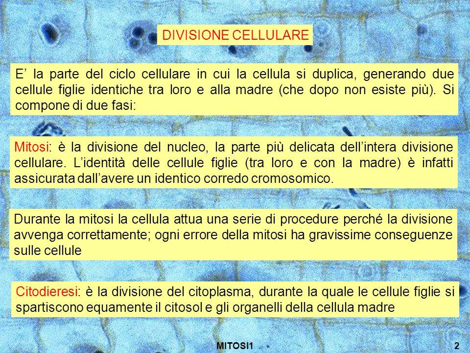 DIVISIONE CELLULARE