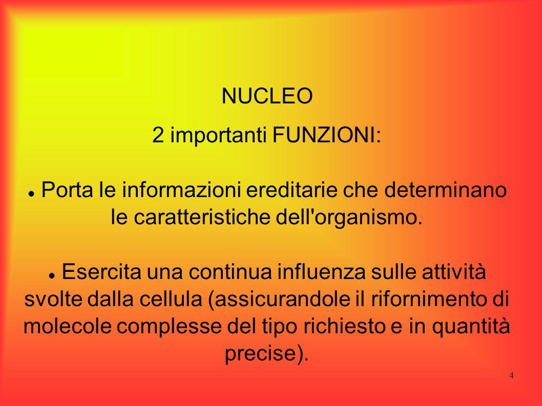 NUCLEO2 importanti FUNZIONI: Porta le informazioni ereditarie che determinano le caratteristiche dell organismo.